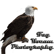 Fay Yocum Photography